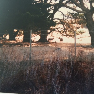 Paddocks along Blakeville Road - 1998